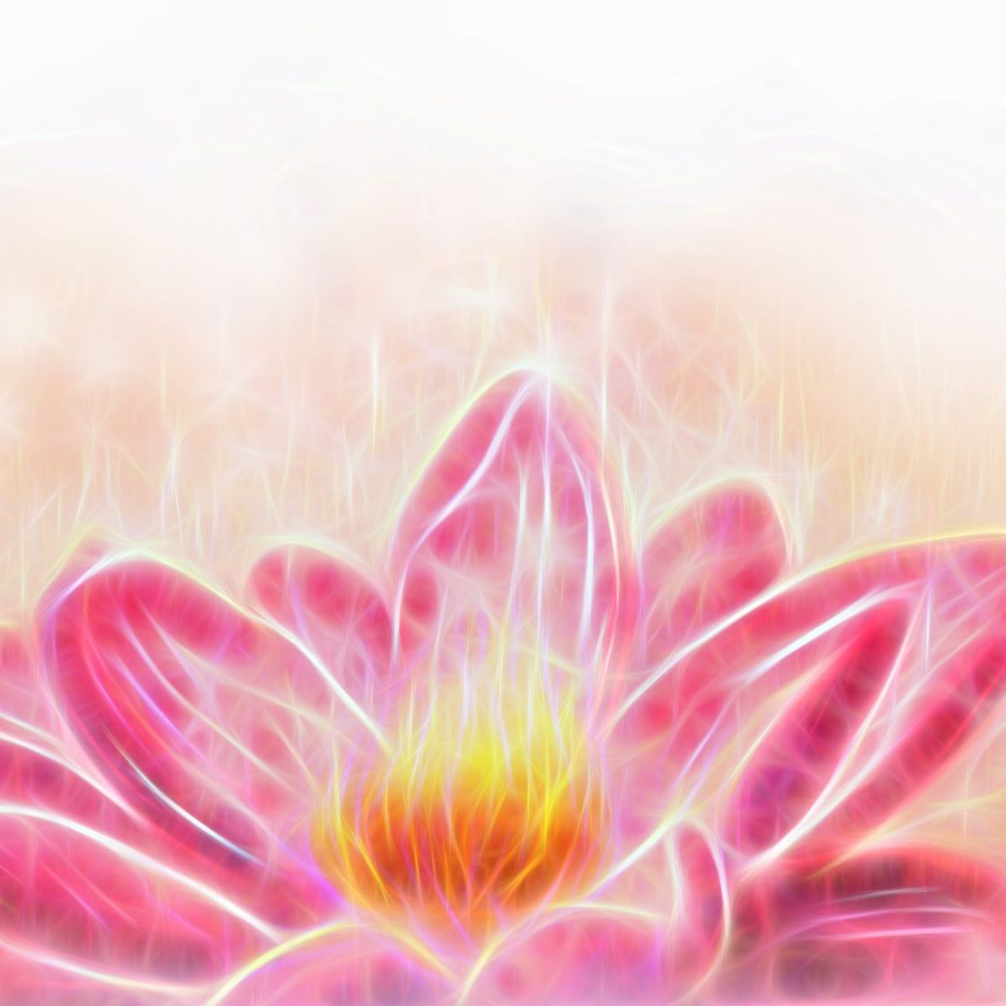 Lotus flower and white circle bokeh and white mist. Illustration collage fractal effect.